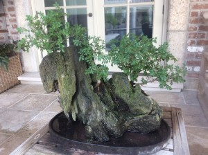 Elm in Rock
