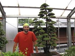 tyler sherrod bonsai artist