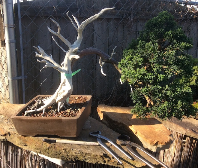 Beginner Bonsai Class – May 3rd