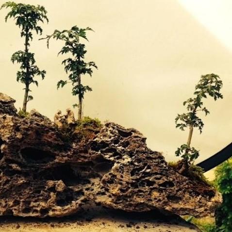 rock planting with shi shi