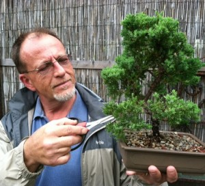 Beginner Bonsai Workshops