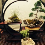 Rock Plantings with Trees, Moss and Accent Plants