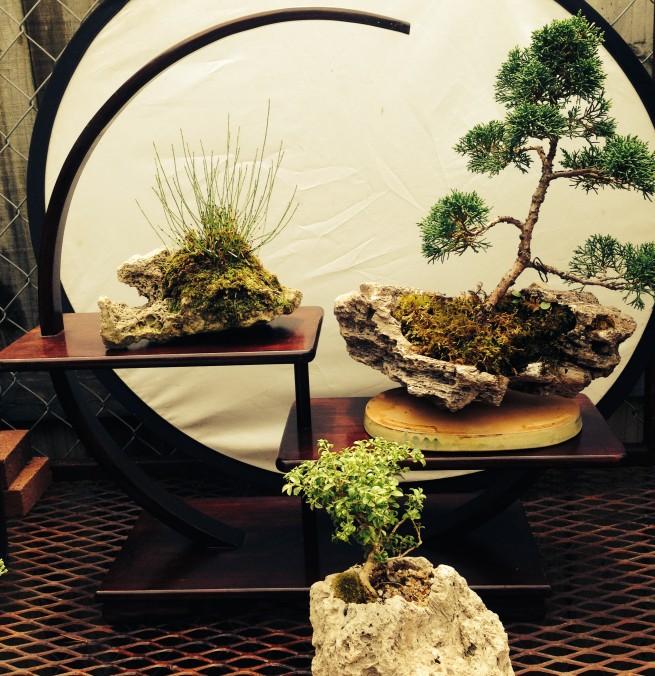 Summer Bonsai Fun Rock Plantings – August 2, 2014