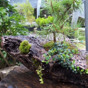 summer bonsai fun