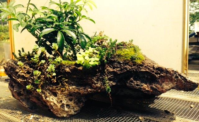 Beginner Bonsai Class June 13, 2015