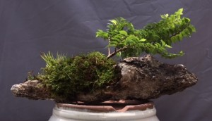 Hilliard Elm and Accent Plants by Malcolm