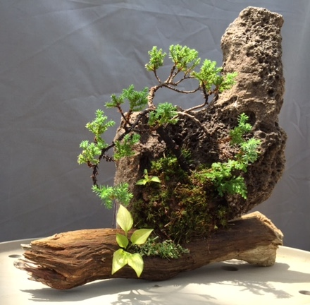 Rock Planting Class With Lace Rocks, Bonsai and Accent plants A Great Success and Much Fun!