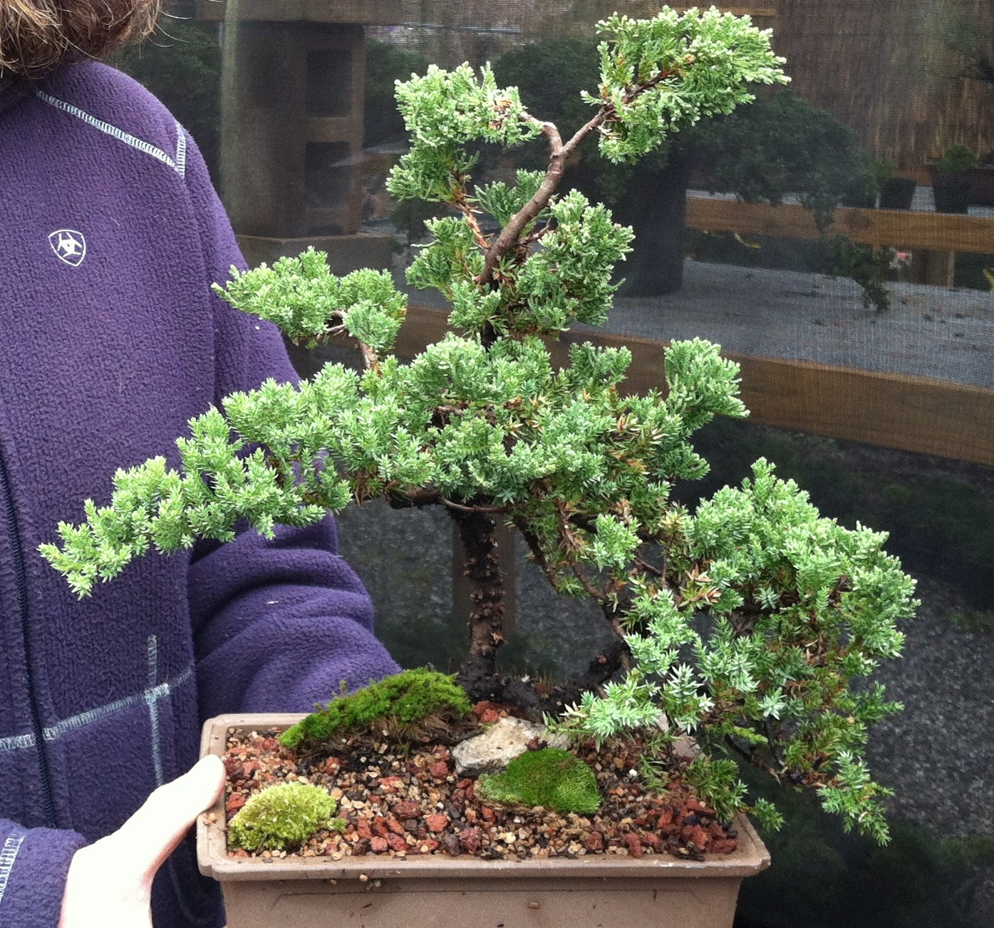 Bonsai Basics Workshop