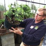 Larry Jackel Yamadori Workshop at Plant City Bonsai