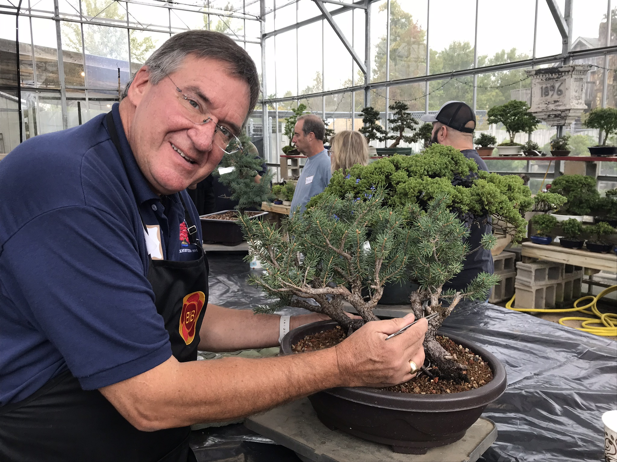 Repotting Pines, Conifers & Deciduous Bonsai