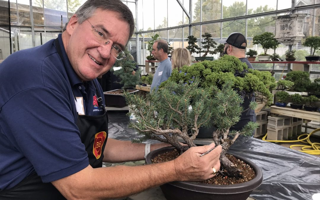 Repotting Pines, Conifers, and Deciduous Bonsai